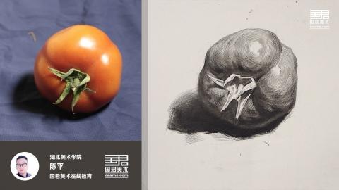 素描静物_单体_西红柿3_陈平
