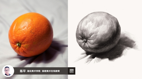 素描静物_单体_桔子_陈平