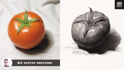 素描静物_单体_西红柿_陈平
