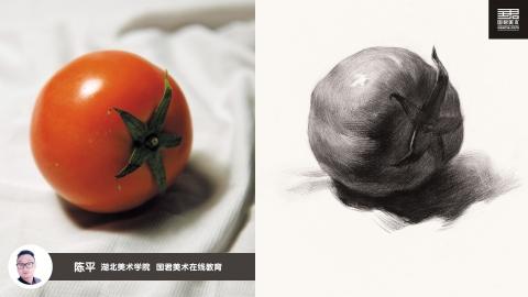 素描静物_单体_西红柿侧面_陈平
