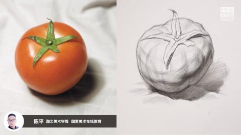 素描静物_结构素描_单体_西红柿_陈平