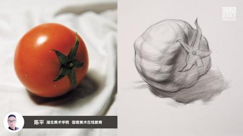 素描静物_结构素描_单体_西红柿侧面_陈平