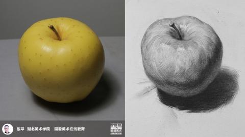 素描静物_单体_黄苹果_陈平